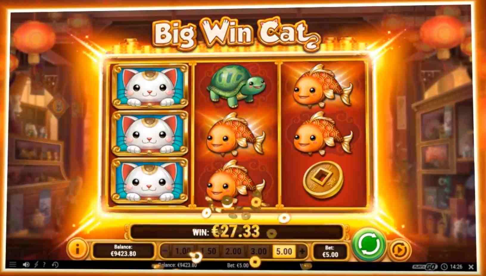 big win cat kolikkopeli iso voitto