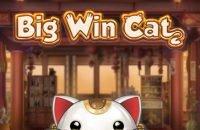 big win cat play'n go logo