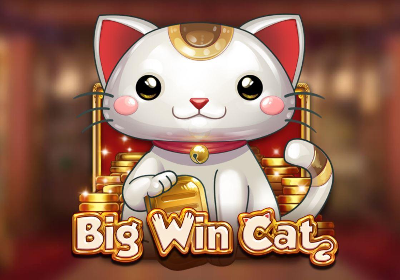 big win cat kuva